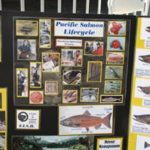 photo of salmon lifecycle display poster