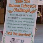 "photo of board with text ""Take the Salmon Lifecycle Challenge"""